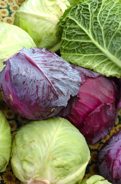 Beautiful Selection of Heads of Cabbage