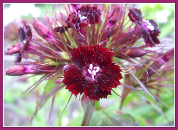 weight loss perfectionism and a perfect flower