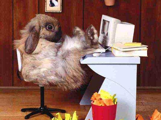 Bunny at Computer | Fearless Fat Loss
