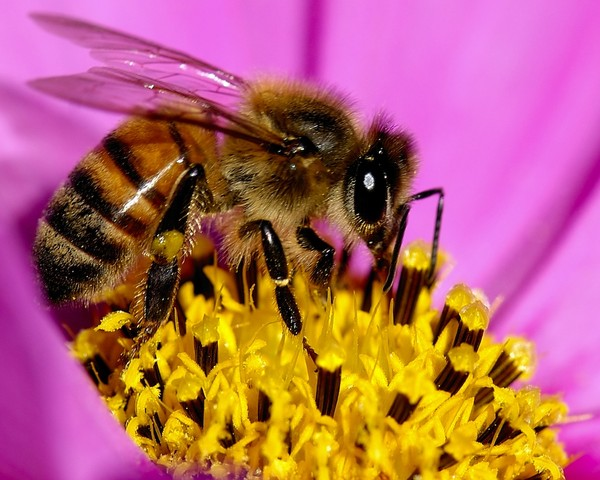 Honey and HFCS - What's Their Relationship?